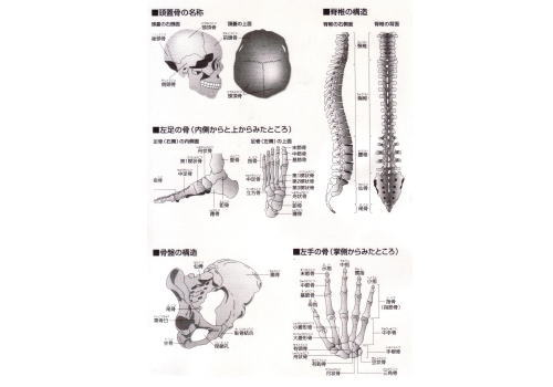 imagememmuscle123